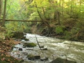Rapid river flowing through near Spencer Gorge Webster's Falls Conservation Area Stock Footage