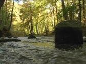 Stock Video Footage of Rapid river flowing through near Spencer Gorge Webster's Falls Conservation Area