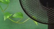 Stock Video Footage of Rotating fan on green textile wall background two, close-up