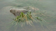 Stock Video Footage of Stone and underwater grass at dawn