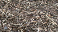 Stock Video Footage of Background from dry grass at seashore, zoom