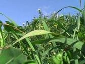 Grassland Stock Footage