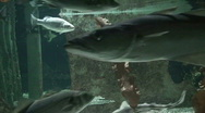 Stock Video Footage of Sea life, close-up