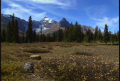 Zoom in to Mount Athabasca  - stock footage