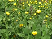 Spring grassland Stock Footage