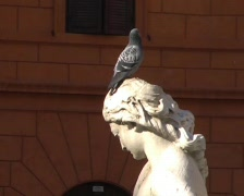 Pigeon on a statue Stock Footage