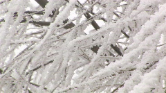 Heavy frost on trees closeup Stock Footage