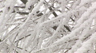 Stock Video Footage of Heavy frost on trees closeup