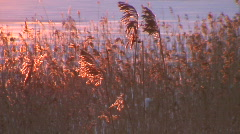Grass at sunrise, winter scenics two Stock Footage