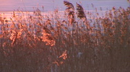 Stock Video Footage of Grass at sunrise, winter scenics two