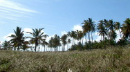 Stock Video Footage of Blue Sky and Coconut trees Brazil