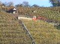 Excavator in a vineyard SD Footage
