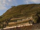 Vineyard Felsengarten Stock Footage