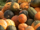 A pile of pumpkins Stock Footage