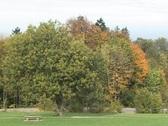 Autumn Trees 1 Stock Footage