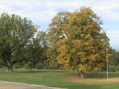 Autumn Trees 3 Stock Footage