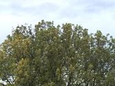 Autumn Trees 4 Stock Footage