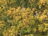 Autumn Trees 5 Stock Footage