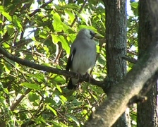 Exotic Bird Stock Footage