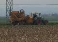 Harvesting sugar beets Footage