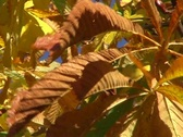 Stock Video Footage of leaves in the autumn
