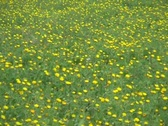 Spring grassland - zoom out Stock Footage