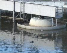 Sewage work ducks - stock footage