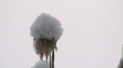 Grass with snow cap Stock Footage