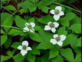 Stock Video Footage of White Flowers 1