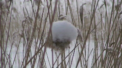 Grass with snow cap two Stock Footage