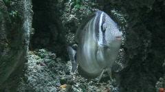 Single vertebrate fish, close-up Stock Footage