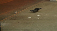 Pigeons on the street Stock Footage