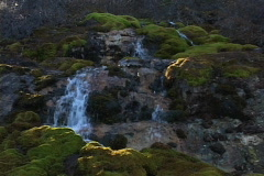 Mossy Stream 2 - stock footage