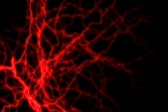 Stock Video Footage of Red Neural Activity