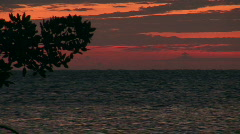 Sunrise on Caye Calker with a plant in the foreground Stock Footage