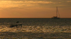 Sailboat and heron Stock Footage