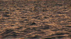 Pink waves shimmer  Stock Footage