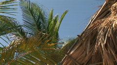 Palm trees near a grass hut - stock footage
