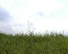 green meadow - stock footage