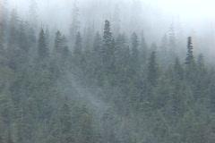 Fog Trees Stock Footage