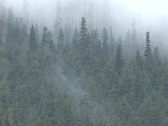 Stock Video Footage of Fog Trees