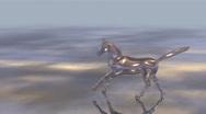 Stock Video Footage of HorseRun HD 08 2997