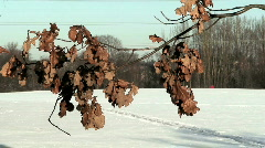 Branch of dead oak tree in winter Stock Footage