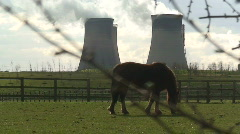 Horse gazing in front of power station. HD 1080i Stock Footage