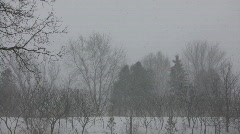 Winter scenic of a blizzard in the park (High Definition) Stock Footage