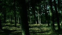 Dark_forest Stock Footage