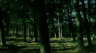 Stock Video Footage of dark_forest