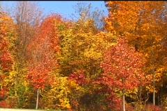 Shades of Autumn Stock Footage