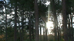 2 clips of sunligh shining through the woods. HD 1080i - stock footage