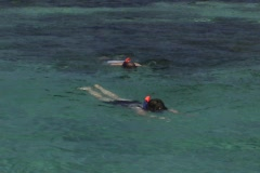 Snorkle swimmers Caribbean Stock Footage